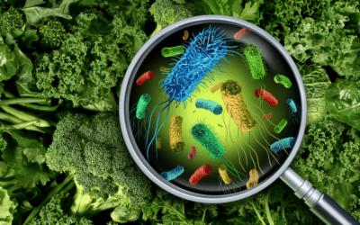 Syndrome du côlon irritable : une maladie du microbiote ?