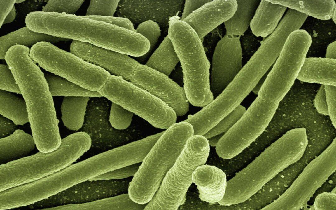 Diversité du microbiote intestinal.