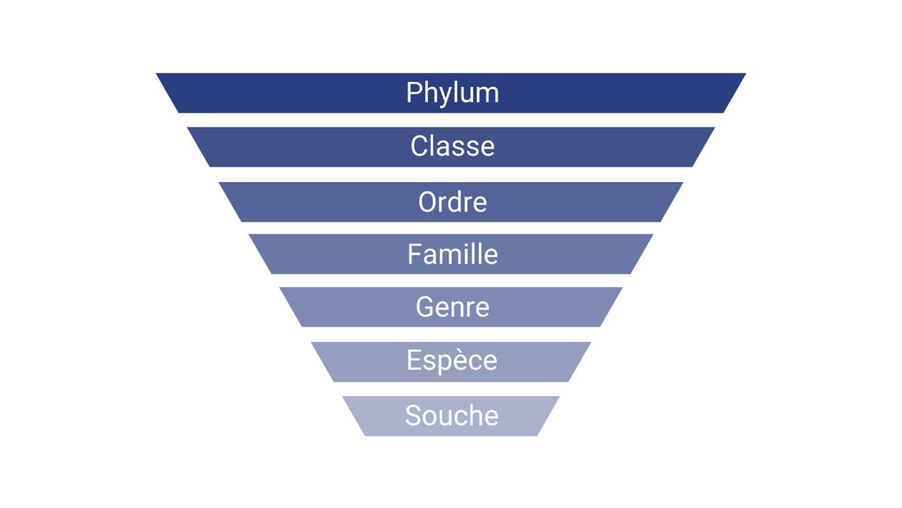 classification bacteries Nahibu